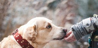 A Story of The Two Dogs – An Old Compelling Tale