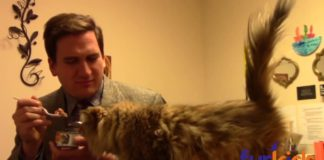 Epic! Funny Commercial by an Animal Shelter Will Make You Want to Adopt a Cat