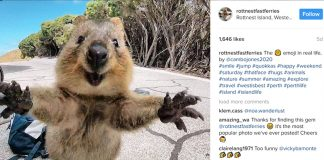 Quokkaselfie Anyone? These Cute Little Creatures Are Taking The Internet By Storm