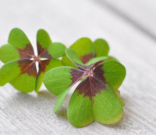 How You Can Improve Your Luck In Life